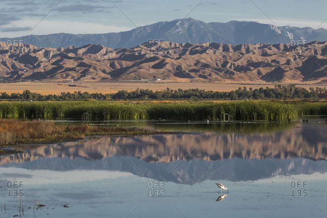 The California Badlands reflected in a pond at the San Jacinto Wildlife Area