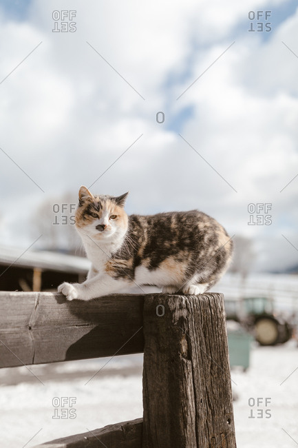 Healthy farm cat sitting alert on corner of wooden fence