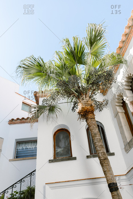 Palm tree standing in courtyard of luxury mansion
