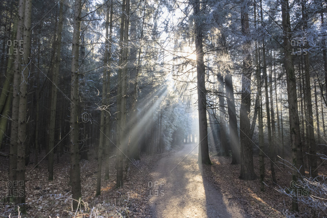 Germany- Bavaria- Upper Bavaria- Markt Schwaben- Schwabener Moos- hiking path in forest