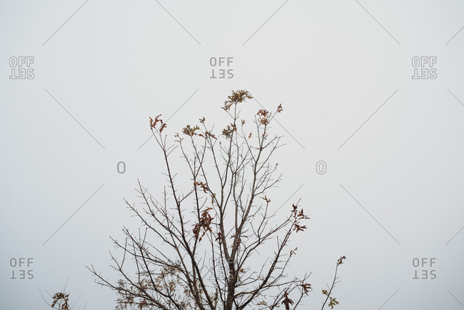 Looking up at bare branches of tree against overcast sky