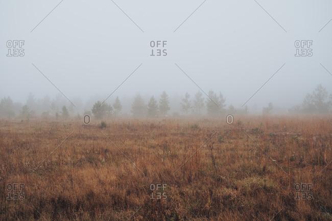 Looking across wintery field shrouded in fog