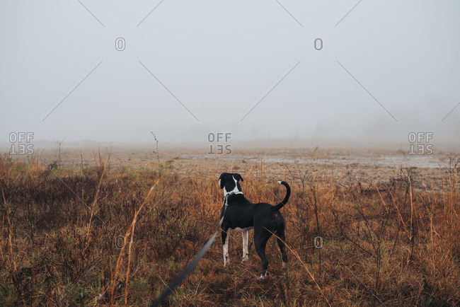 Alert dog looking across wintery field shrouded in fog
