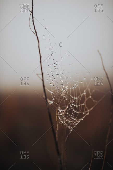 Close up of water droplets clinging to spider web