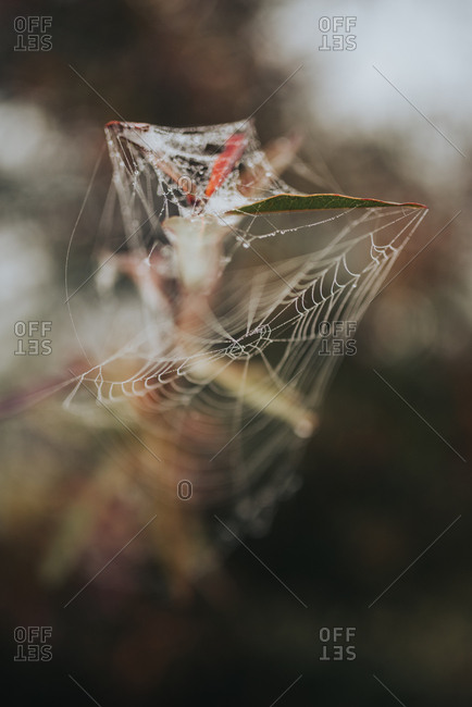 Selective focus close up of spider web hanging over leaf