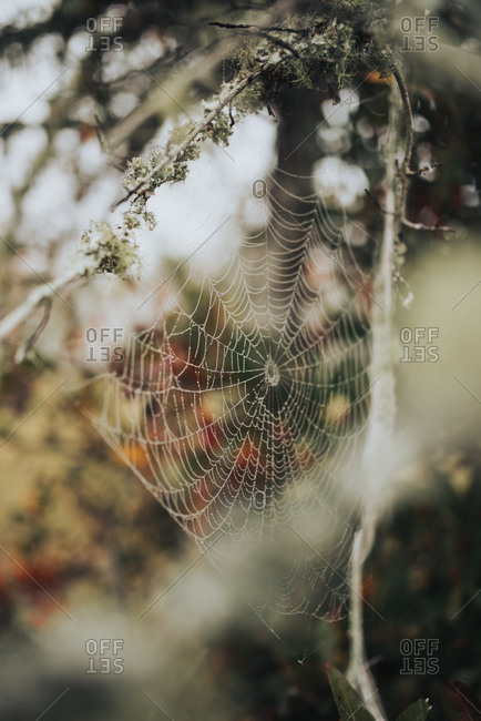 Close up of spider's web constructed between tree branches