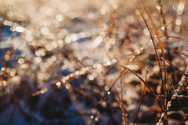 Sun sparkling off iced up blades of grass on cold winters day