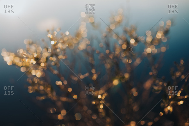 Defocused image of sun sparkling off icy bush on clear winter morning