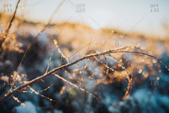 Icy branch glittering in sunlight