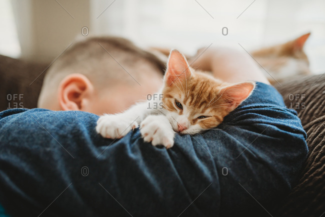 Kitten sitting on boys arm as he takes a nap