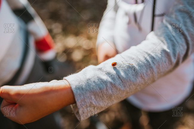 Child showing lady bug crawling along arm to friend