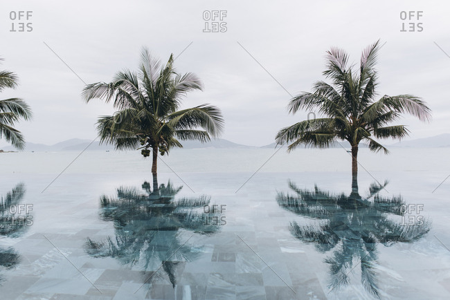 Coconut palm trees reflecting in infinity pool against clear sky