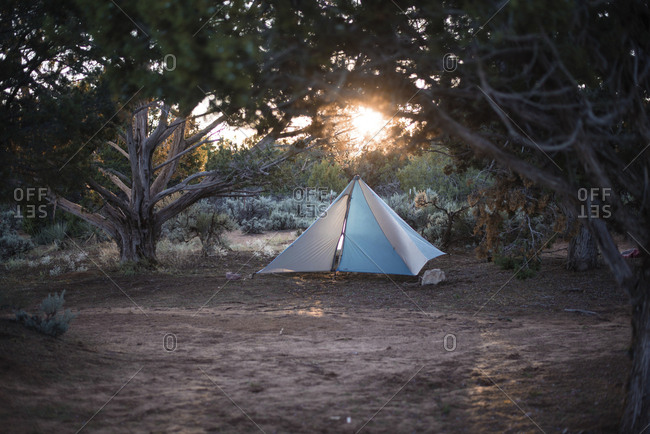 Tent on field in forest during sunset