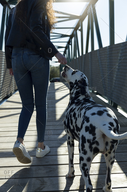 Low section of woman with Dalmatian walking on footbridge