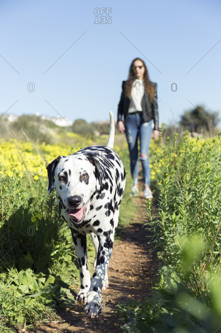 Woman with Dalmatian walking on field amidst plants against clear blue sky