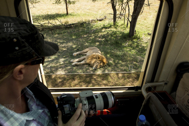 High angle view of woman with camera looking at lion while traveling in bus