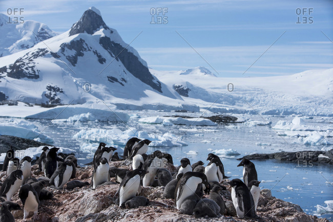 Penguins and sea lions on rocks by frozen sea against sky