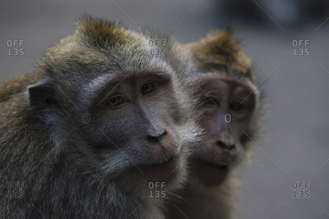 Close-up portrait of monkeys