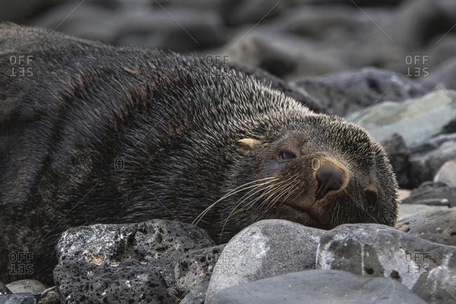 Sea lion relaxing on rocks