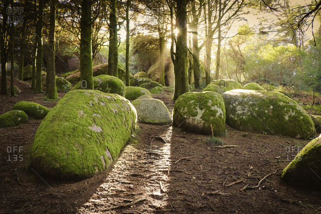 Moss covered rocks on field in forest