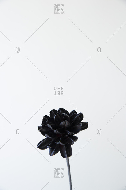 Painted flower against white background