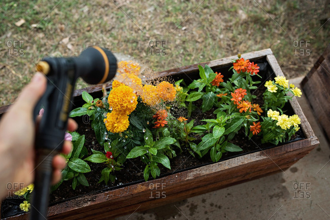 Person watering a flower box
