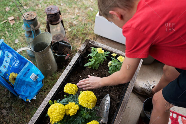 Young boy planting flowers in a flower box