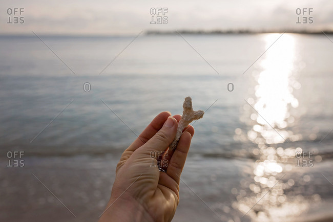 Hand holding a dried piece of star fish