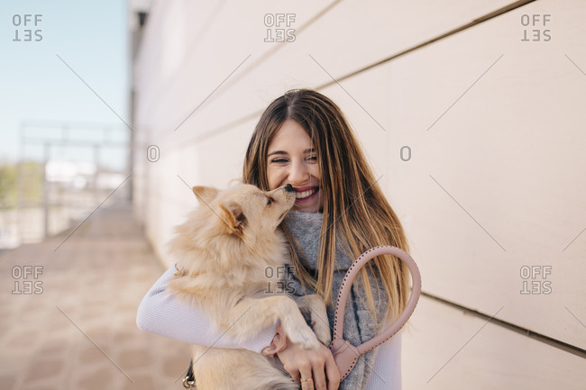 Small dog sniffing laughing owner's face