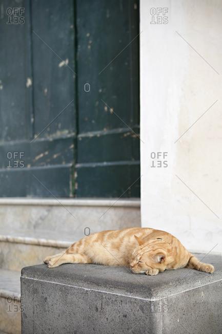 Cat sleeping outside building in village