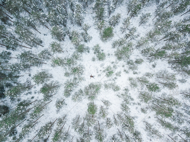 Aerial view of a person lying in the middle of the snowy forest in Polliku, Estonia
