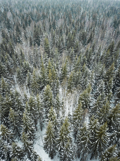 Aerial view of a snowy forest in nordic landscape of Estonia