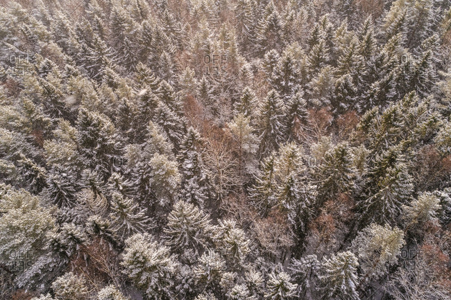 Aerial view of the snowy colorful forest of Muraste, Estonia