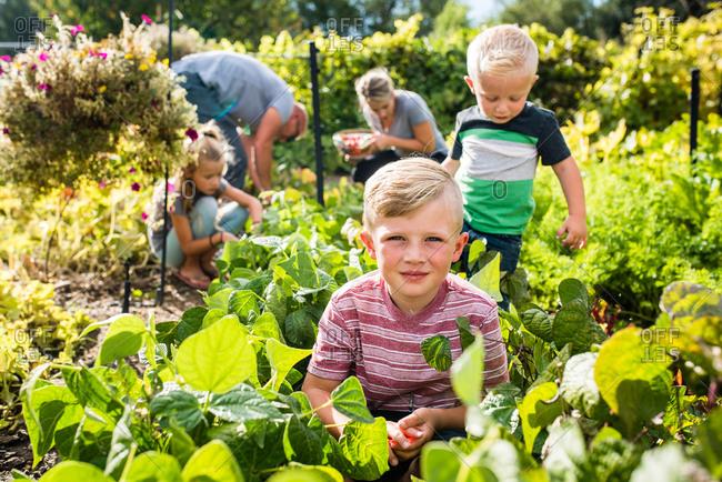 Family picking vegetables together in sunny backyard garden