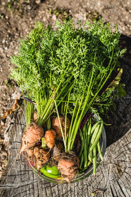 Pail of garden vegetables on sunny stump