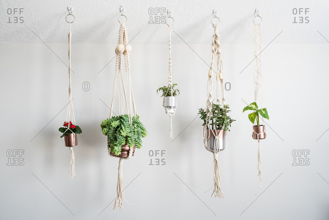 Plants hanging in macrame planters