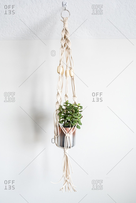 Plant hanging in a macrame planter