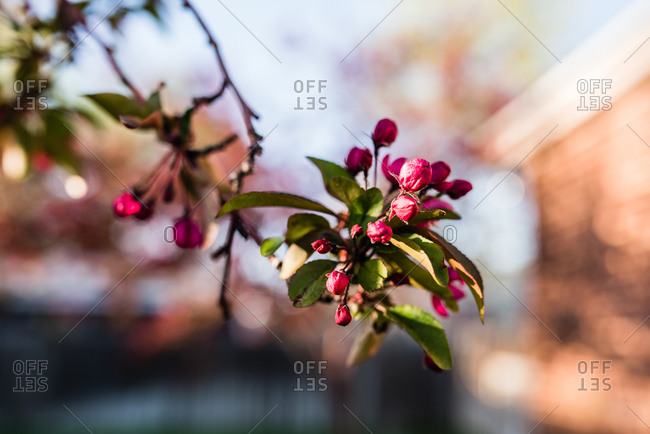 Blossoms on a tree in spring