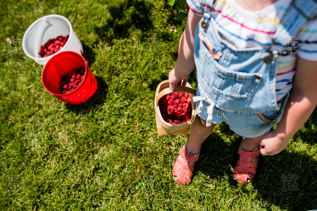 High angle view of little girl holding basket of fresh picked raspberries