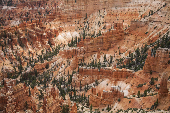 High angle view of hoodoos and trees on side of canyon in Bryce Canyon, Utah, USA