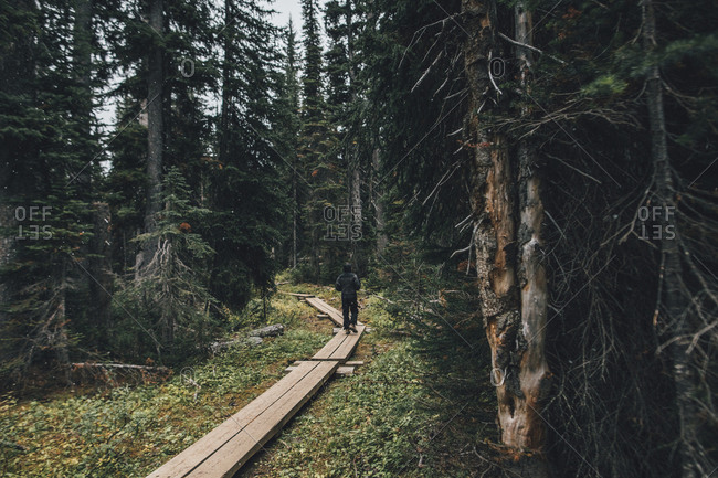 Canada- British Columbia- Yoho National Park- man hiking on boardwalk through forest