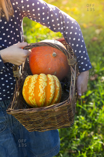 Girl carrying basket with pumpkins in autumn- partial view