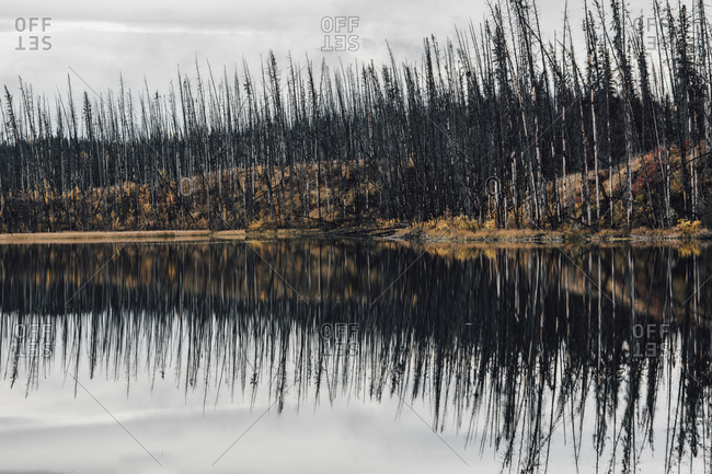 Canada- British Columbia- deadwood after forest fire