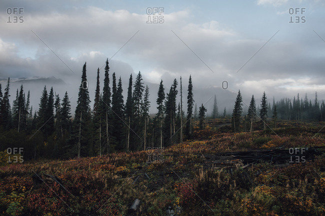 Canada- British Columbia- Kitimat-Stikine A- forest in autumn
