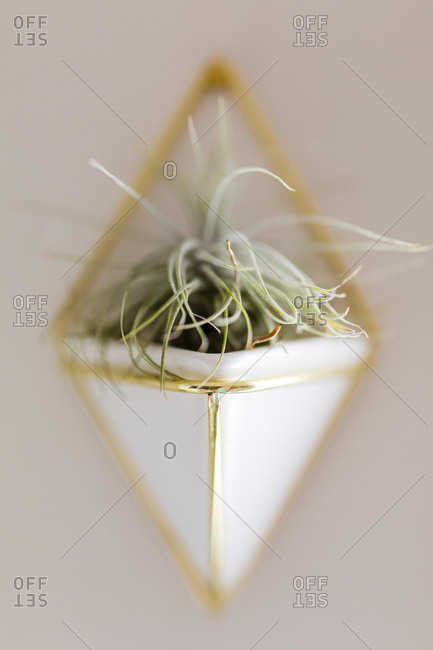 Close up of triangular vase containing plant mounted on wall