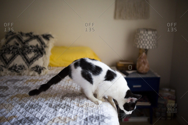 Pet cat looking before leaping off bed
