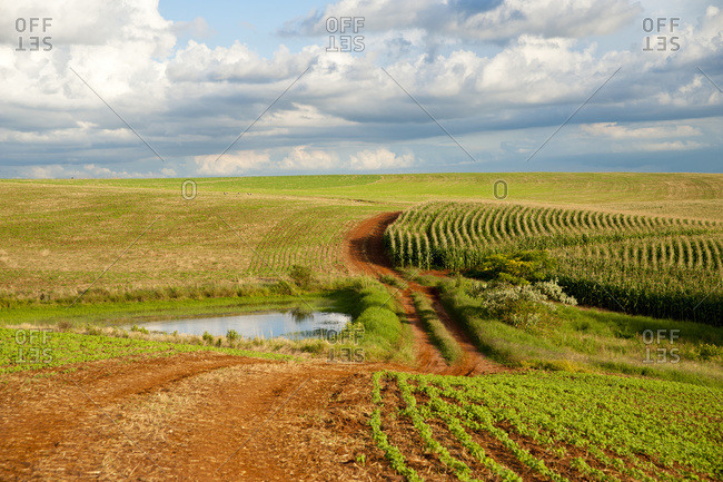 April 6, 2018: Soya And Corn Fields In Santa Barbara Do Sul, Rio Grande Do Sul, Brazil