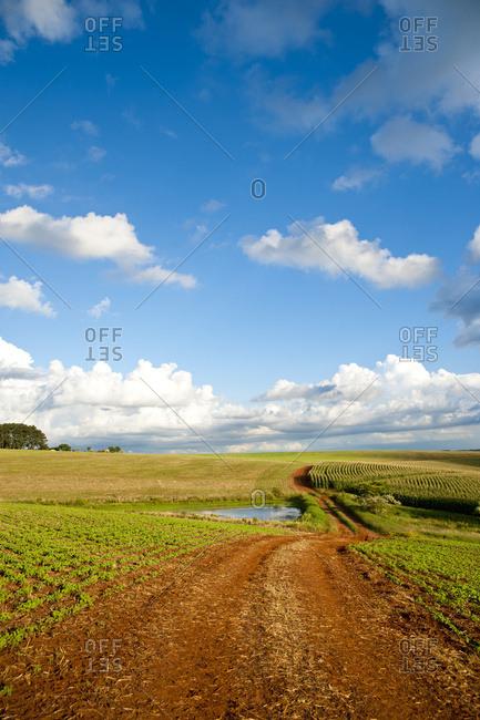 April 6, 2018: Soya And Corn Fields In Santa Barbara Do Sul, Rio Grande Do Sul, Brazil