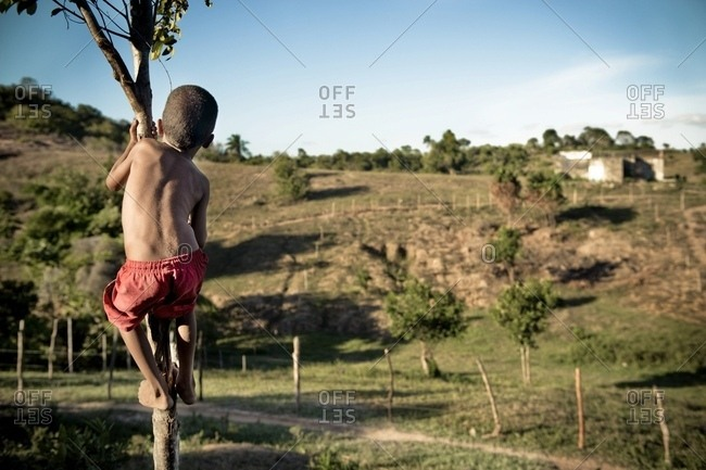 April 6, 2018: Young Boy Climbing Small Tree; Brazil