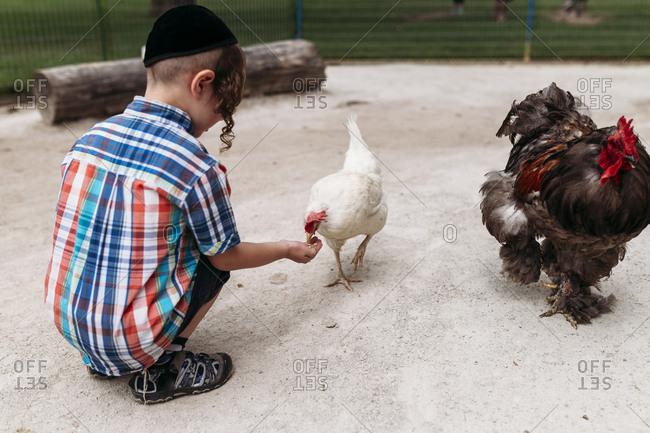 Full length of boy feeding hen while crouching at farm